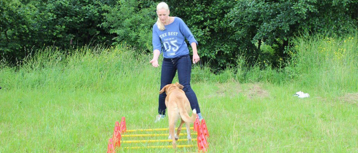Permalink auf:Hundephysiotherapie