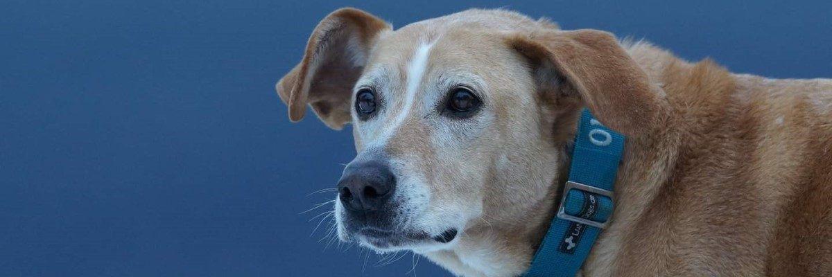Mobile Hundephysiotherapie